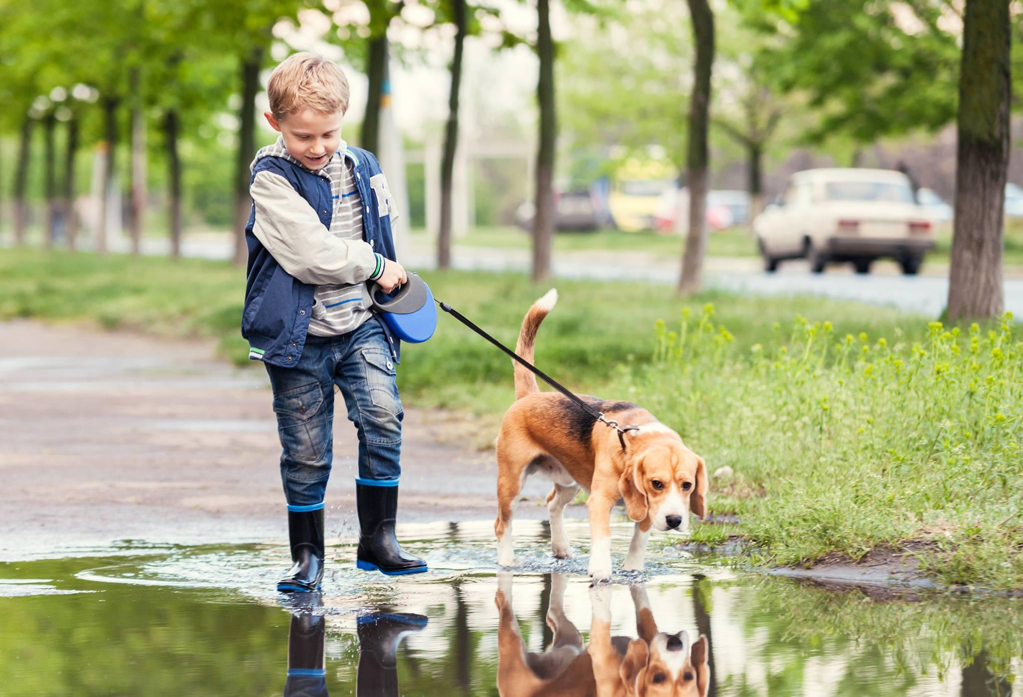 Limit.2.Boy&Dog